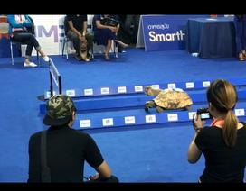 """Clip """"Cuộc đua giữa rùa và thỏ được tái hiện ngoài đời thực"""" ấn tượng nhất tuần qua"""