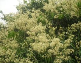 Ngọt ngào mùa hoa miền sơn cước