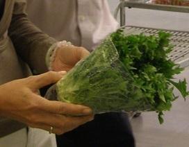 Chuyên gia hướng dẫn chọn rau, củ, quả an toàn