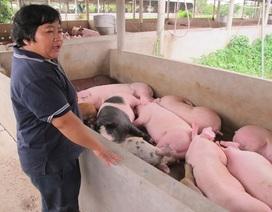 Trung Quốc dừng mua, giá lợn hơi lao dốc