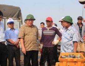 Hơn 11.000 hộ dân Quảng Trị bị ảnh hưởng do cá chết bất thường