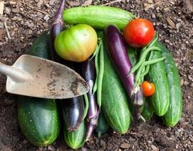 Chế độ ăn hữu cơ trong một tuần giúp giảm 90% độc tố trong cơ thể