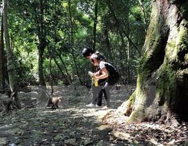 Nguyên nhân 13 người bị khỉ cắn, gây thương tích tại Tây Ninh