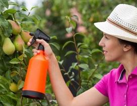 Soi lượng thuốc bảo vệ thực vật trên hoa quả