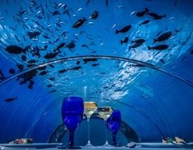 """Ngắm nhà hàng dưới biển """"sang chảnh"""" lớn nhất thế giới"""