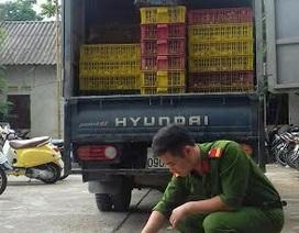 Bắt giữ hơn 2 vạn vịt giống Trung Quốc nhập lậu