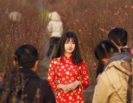 Thiếu nữ trong vườn đào được chọn làm ảnh ấn tượng Việt Nam trên Reuters