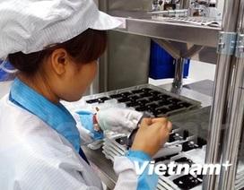 Ngành phần mềm Việt: Sụt giảm trong nước, tăng trưởng nước ngoài
