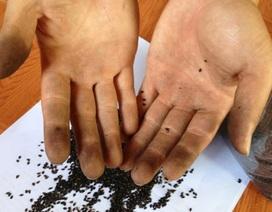 Hoang mang thông tin dùng lõi pin nhuộm đen... hạt vừng