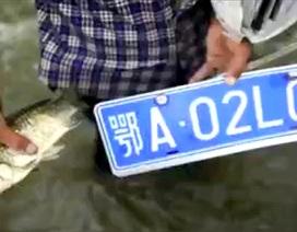 Nghề vớt biển số xe mùa mưa lũ tại Trung Quốc