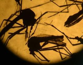 Mexico: Mẹ nhiễm Zika vẫn sinh con khoẻ mạnh