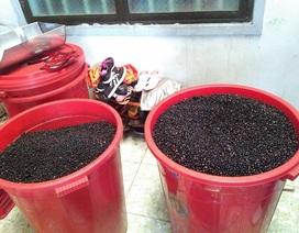 Đình chỉ cơ sở chế biến cà phê bằng đậu nành và hóa chất