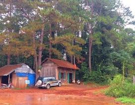"""Gỗ """"khủng"""" bị đốn hạ ngay sát... trạm bảo vệ rừng"""