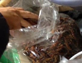 Rùng mình ớt khô nhiễm nấm độc gây ung thư