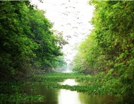 Ngắm nhìn Việt Nam hữu tình qua những khoảng trời hoang sơ mùa xuân