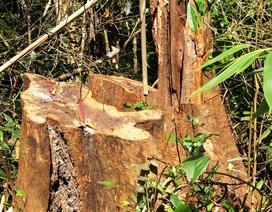 Người dân phá rừng đầu nguồn để làm đồ dùng trong nhà?