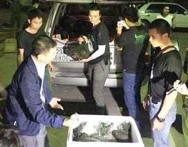 Hành trình truy bắt xe Land Cruiser chở hàng trăm con tê tê như phim hành động