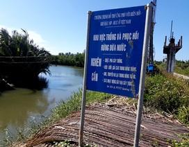"""Ông Nguyễn Sự lên tiếng vụ """"băm nát"""" rừng dừa Bảy Mẫu"""
