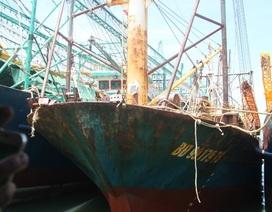 Bình Định thành lập tổ công tác thẩm định chất lượng tàu vỏ thép hư hỏng
