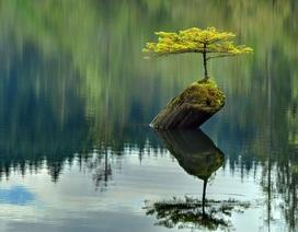 """Chùm ảnh """"thiên nhiên vượt khó"""" giúp bạn có thêm nghị lực cho cuộc sống"""
