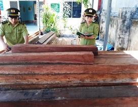 Dùng cưa máy phá sạch hơn 5.000 m2 rừng phòng hộ