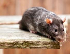 Bỏ tiền triệu để ăn và uống cùng… chuột