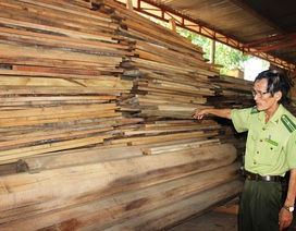Bắt Tổng Giám đốc chủ mưu vụ phá gần 61 ha rừng