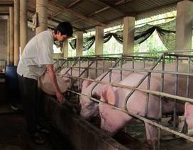 Cấm dùng kháng sinh trong thức ăn chăn nuôi để kích thích sinh trưởng