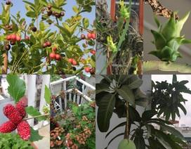 """Những vườn quả trĩu trịt trên sân thượng """"độc"""" nhất Việt Nam"""