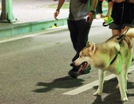 """Không rọ mõm cho chó vì """"thú cưng không cắn ai bao giờ"""" (!)"""