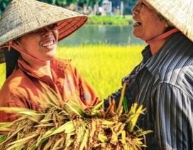 Ninh Bình được mùa: Những bức tranh tuyệt đẹp đầy màu sắc