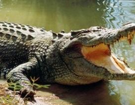 Đang đi tiểu ở bờ nước thì bị cá sấu lao lên đớp đứt tay