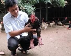 """""""Vua gà"""" Đông Tảo hé lộ bí quyết thu 3,5 tỉ đồng/năm"""