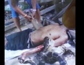 Thái Lan: Bắt trăn khủng về nuôi, hôm sau bị siết tới chết