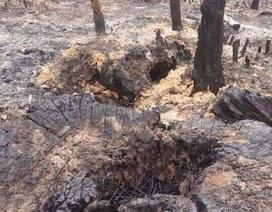 Chủ tịch tỉnh Bắc Giang chỉ đạo xử lý tình trạng tàn phá, hủy hoại rừng