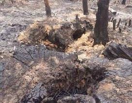 """Bắc Giang: Quyết liệt chặn đứng nạn rừng """"chảy máu"""", đất rừng vào sổ đỏ """"nhà quan""""!"""
