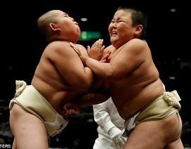 Sửng sốt hình ảnh những em nhỏ thi đấu vật sumo