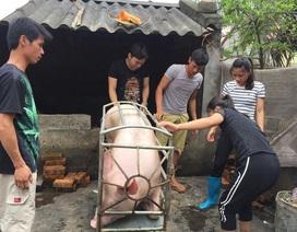 Một doanh nghiệp mua hết số lợn của chị bán thịt bị hắt chất bẩn