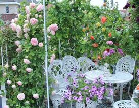 Khu vườn tràn ngập sắc hoa, đẹp như cổ tích của mẹ Việt ở Hà Lan
