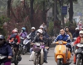 """""""Con đường đào quất"""" lớn nhất Hà Nội"""