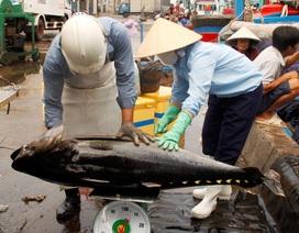 Nghề lưới vây thất thu chuyến đi biển xuyên Tết