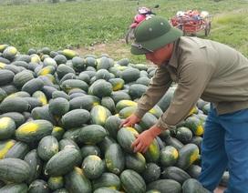Ninh Bình: Nông dân lãi cả trăm triệu đồng nhờ trồng dưa hấu