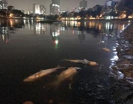 Hàng tấn cá chết ở hồ Hoàng Cầu