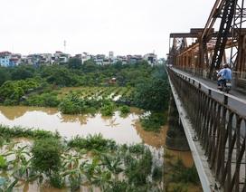 Bãi giữa sông Hồng mùa nước ngập