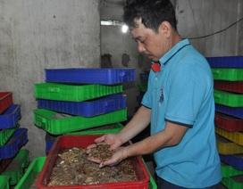 Hiệu quả từ con nuôi dúi rừng và sâu đất ở thành phố
