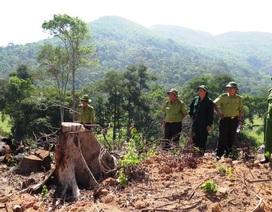 """Hơn 43 ha rừng bỗng dưng """"biến mất"""" là đặc biệt nghiêm trọng"""