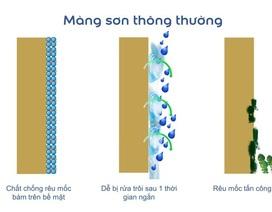 Giải pháp bảo vệ tường khỏi rêu mốc hiệu quả & dài lâu