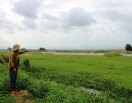 Phú Yên: Mất đất sản xuất, người dân cầu cứu chính quyền