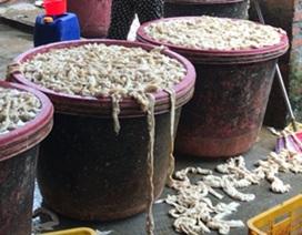 Xuất đỉa sang Trung Quốc 600 ngàn đồng/kg; bán tía tô đi Nhật 700 đồng/lá