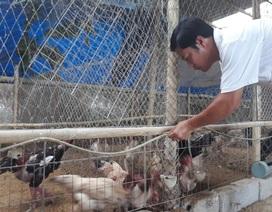 Thạc sĩ bỏ giảng đường về nuôi vịt, gà kiếm hàng trăm triệu đồng mỗi năm
